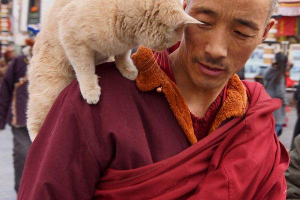 Lhasa: a monk with a cat on his shoulder at the Barkhor