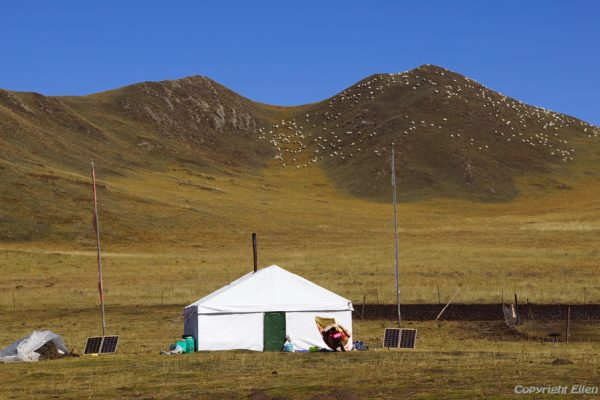 From Tangke to Zoige: vast grasslands with nomads and yaks and sheep
