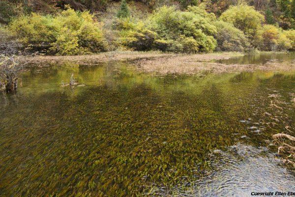 Jiuzhaigou National Park: Arrow Bamboo Lake