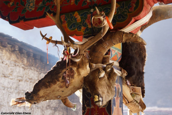 A row of severed animal heads line the portico of the five protector chapels at Tsurphu Monastery