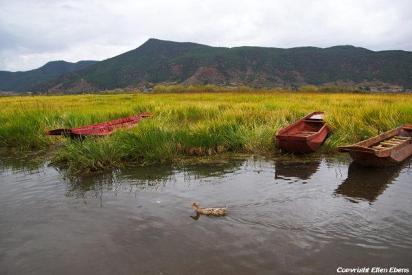 Caohai wet land area at Lugu Lake