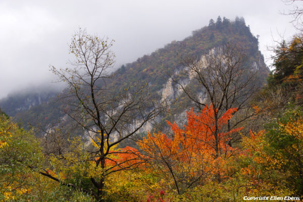 Autumn colors in the Danyunxia Scenery
