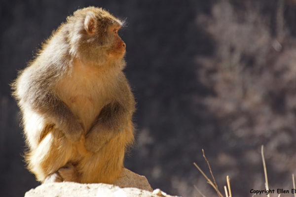 Traveling fromNanxiang to Tsedang. Monkey's at the side of the road.